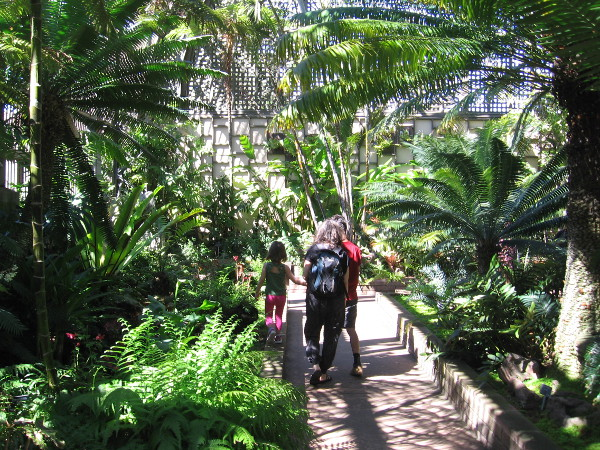 Of course, you can always find a lot of greenery inside Balboa Park's Botanical Building!